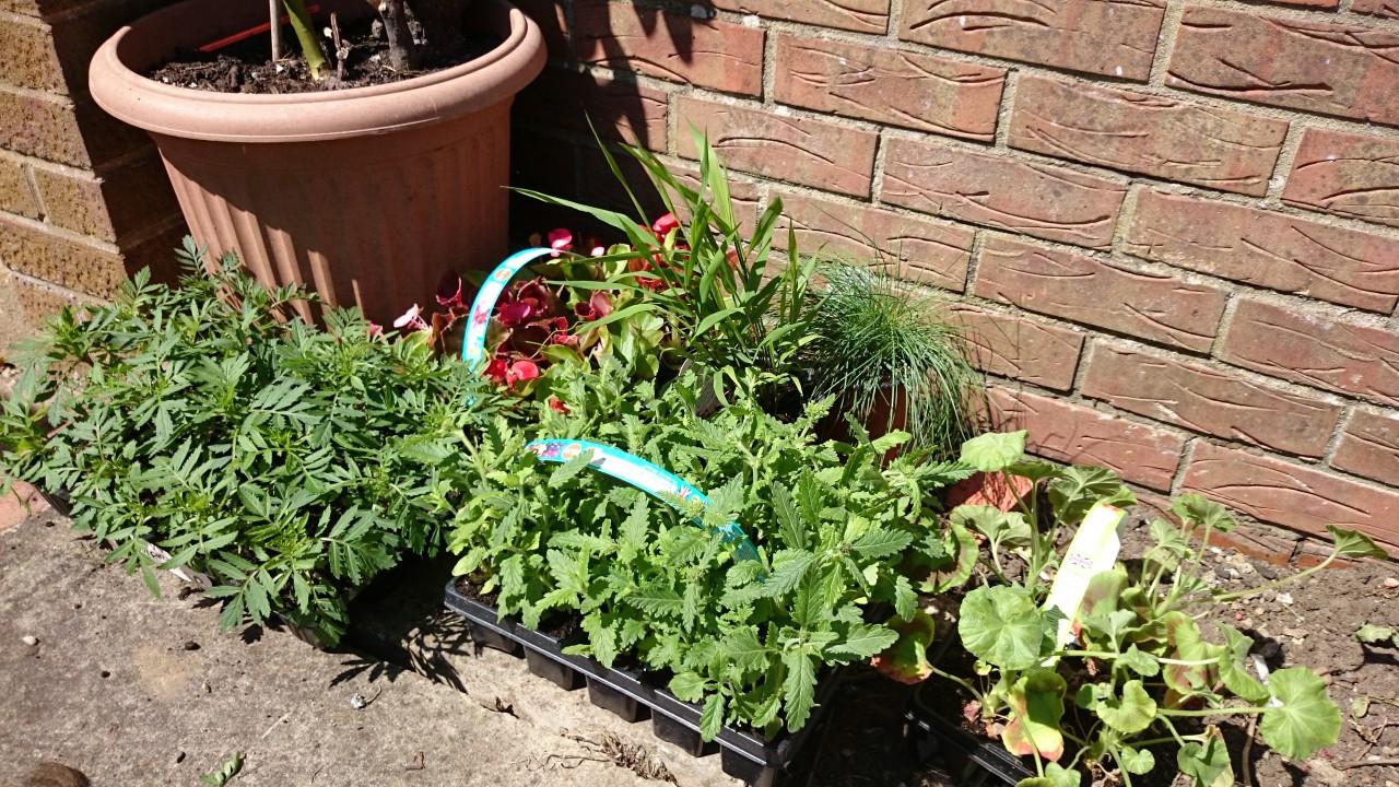 Border Plants