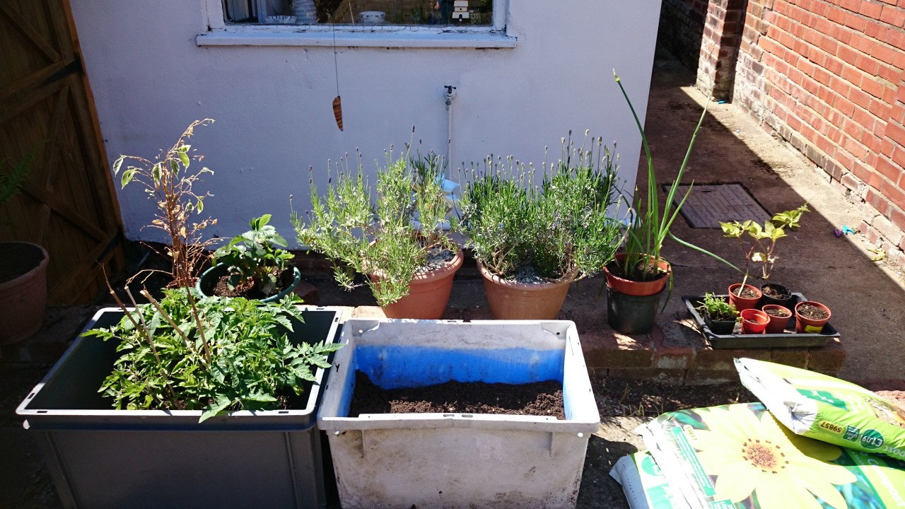The beginnings of a container garden