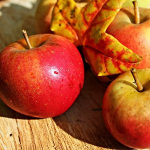 The Family Patch autumn Equinox Activities for Kids